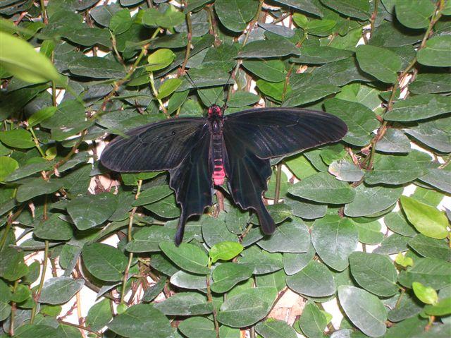 serre aux papillons Orlean23