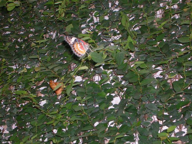 serre aux papillons Orlean24