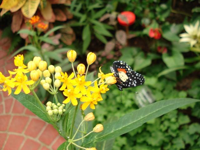 serre aux papillons Serre_25