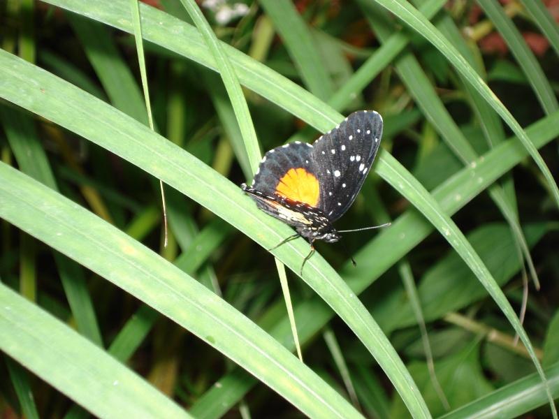 serre aux papillons Serre_36