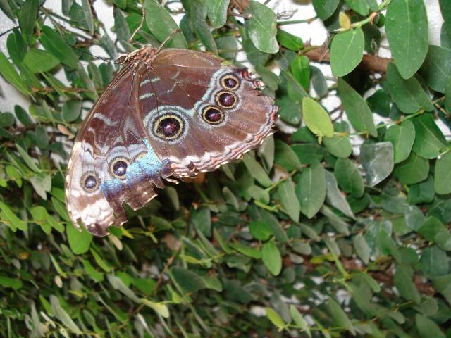 serre aux papillons Serre_40