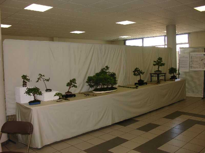 Exposition du Bonsaï Club du Lyonnais 2007 Dsc04211