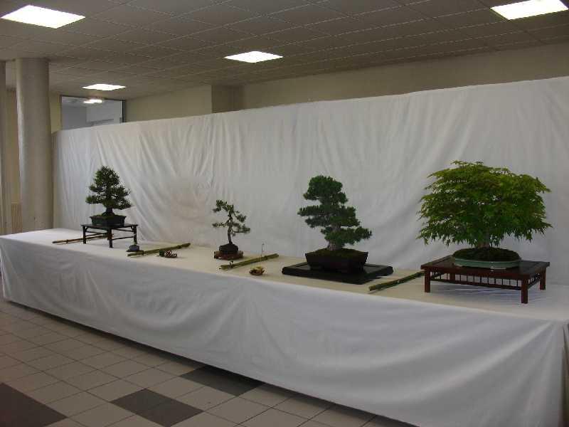 Exposition du Bonsaï Club du Lyonnais 2007 Dsc04212