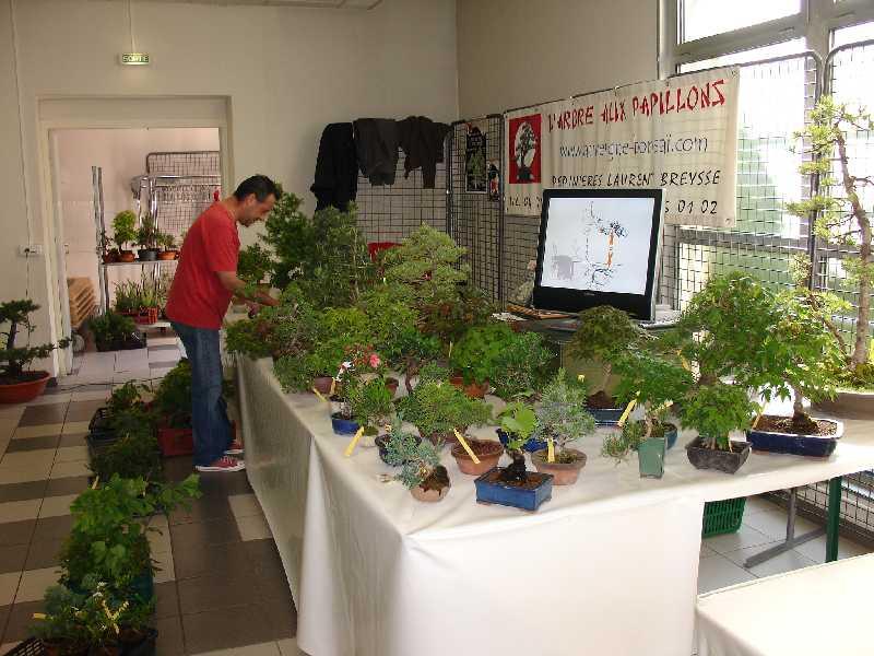 Exposition du Bonsaï Club du Lyonnais 2007 Dsc04215