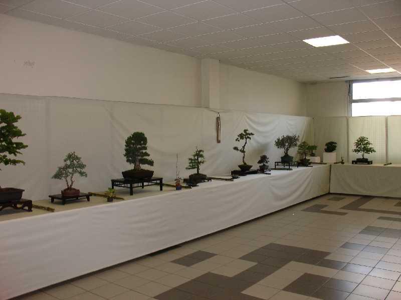 Exposition du Bonsaï Club du Lyonnais 2007 Dsc04216
