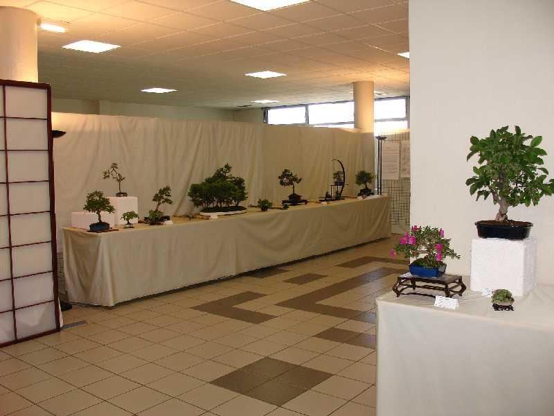 Exposition du Bonsaï Club du Lyonnais 2007 Dsc04313