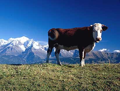 Les deux Savoies (Savoie; Haute-Savoie) Ferra_10