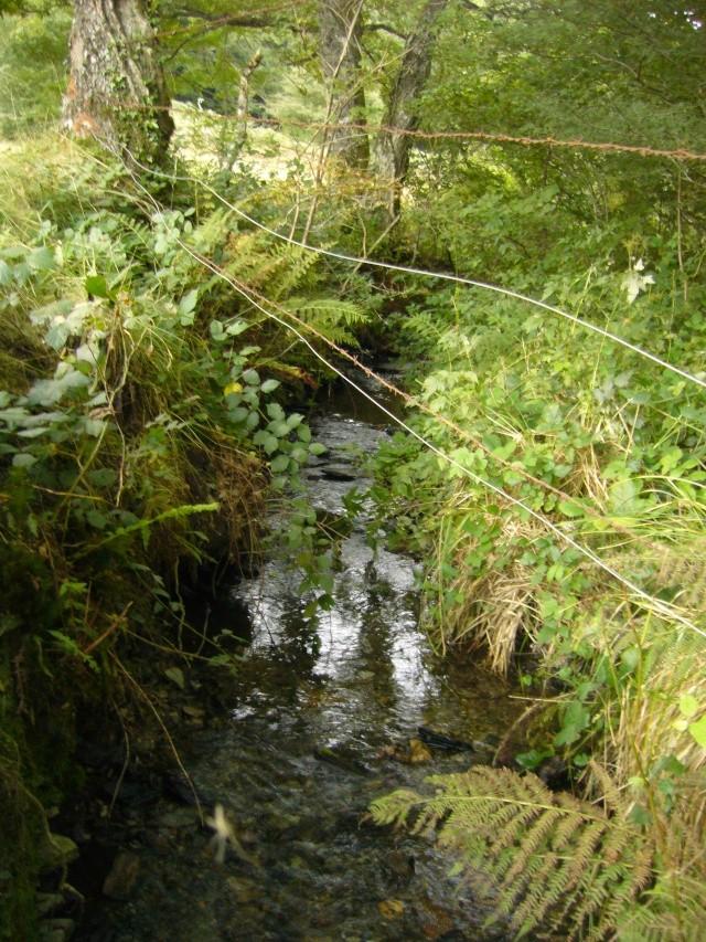 pêche à la barre dans le Cantal Fermet10