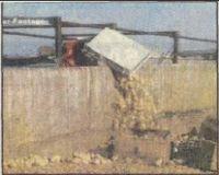 Des poussins sont abusés en Afrique du Sud !!! Chicke11