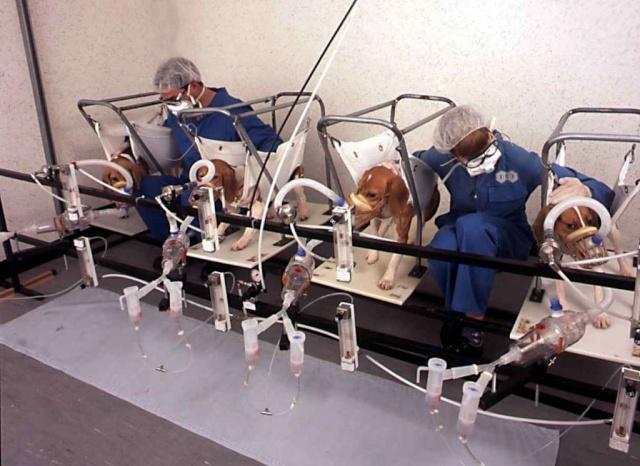 AV LE 21/01/10 : Contactez les Députés européens des méthodes alternatives à la vivisection Vivise14