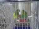 nouveau couple Photo010