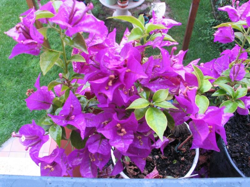 Des fleurs dans un triste jour Img_2816