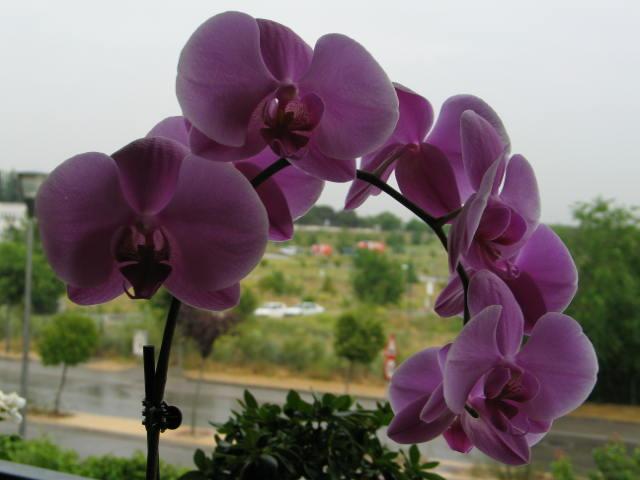Des fleurs dans un triste jour Img_2817