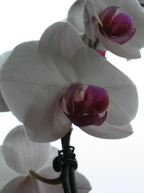 Des fleurs dans un triste jour Img_2820
