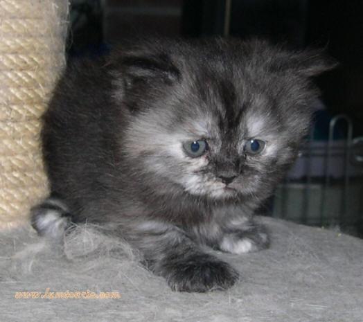 mes petites chatonnes à 5 semaines 18_05-12