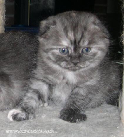 mes petites chatonnes à 5 semaines 18_05-13