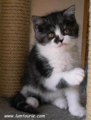 mes petites chatonnes à 5 semaines Stella10