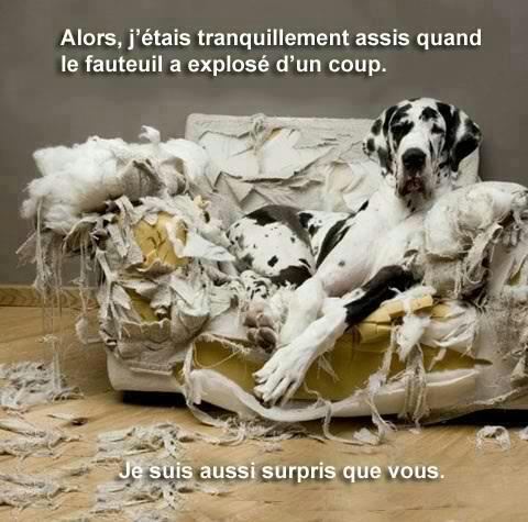 Le bêtisier de nos chiens - Page 8 64543_10