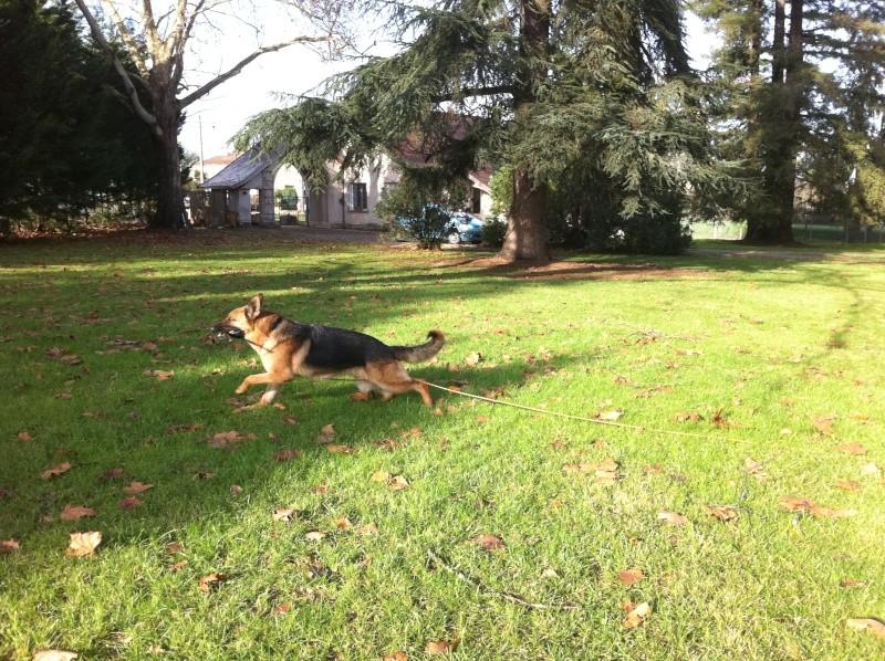 Les remarques faites sur vos chiens... et vos réparties! - Page 2 Photo_10