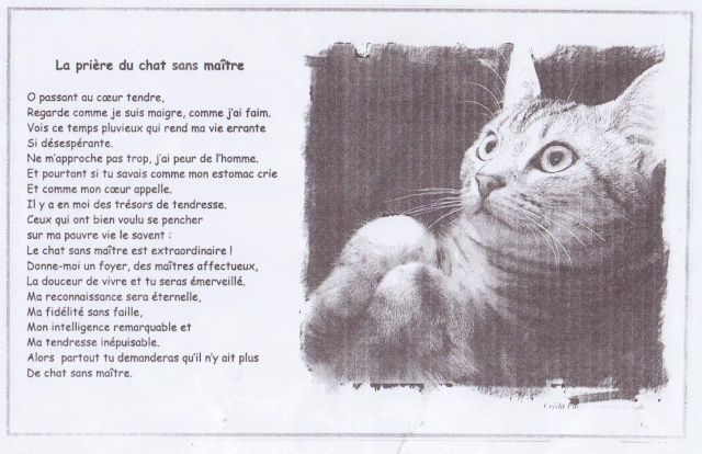 la prière du chat Priare11