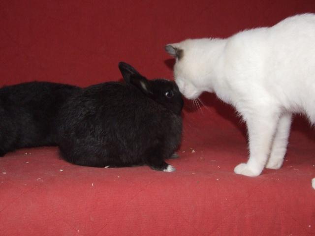 4 jeunes lapins env 2-3 mois 03410
