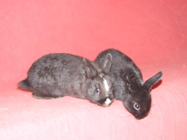 4 jeunes lapins env 2-3 mois 04610
