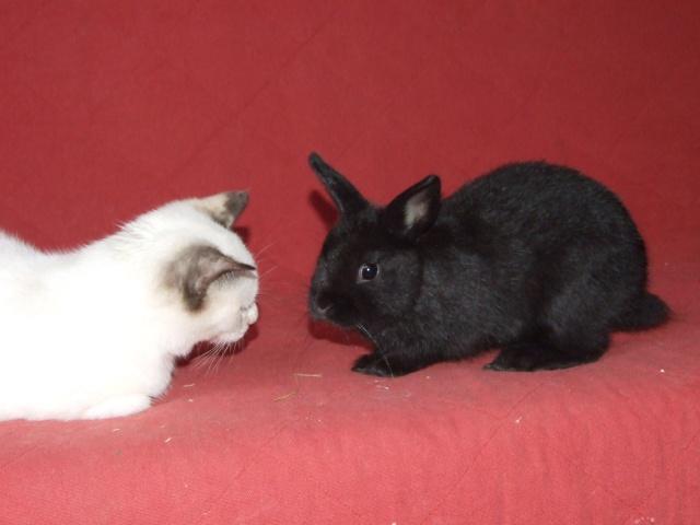 4 jeunes lapins env 2-3 mois 04710