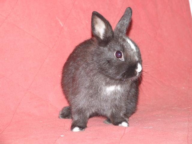 4 jeunes lapins env 2-3 mois 04810