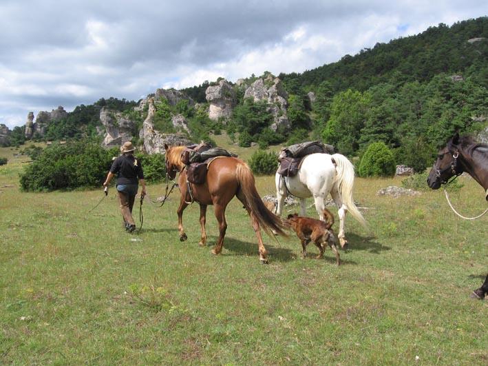 1 mois dans la Lozère (et Gard, Aveyron, etc...) Lozere14