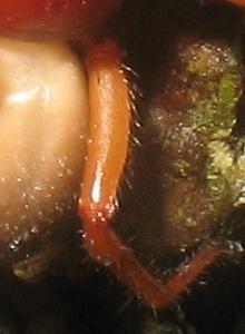 Enigme araignée. Anigme10