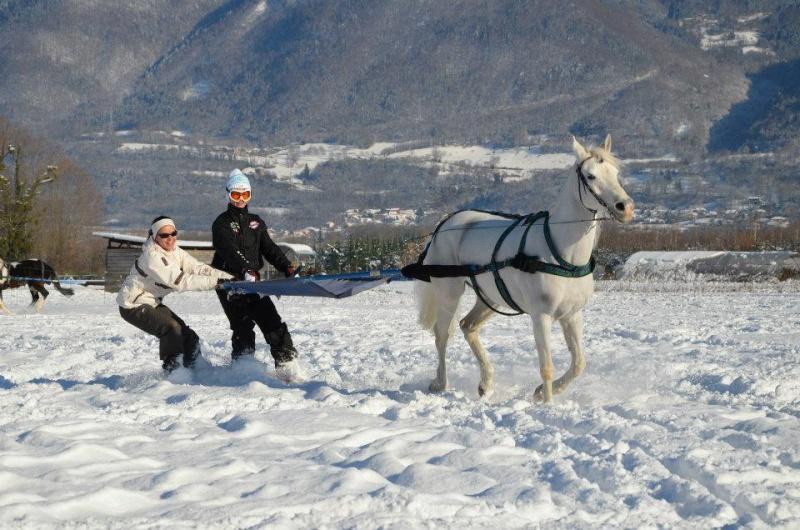 Ski-Joëring à St Hilaire du Touvet 18466810