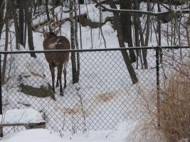 Photos d'un beau buck Photos14
