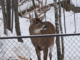 Photos d'un beau buck Photos15