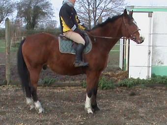 KARNET - Cheval de selle polonais né en 1993 - adopté en décembre 2009 par Sophie Gniada10
