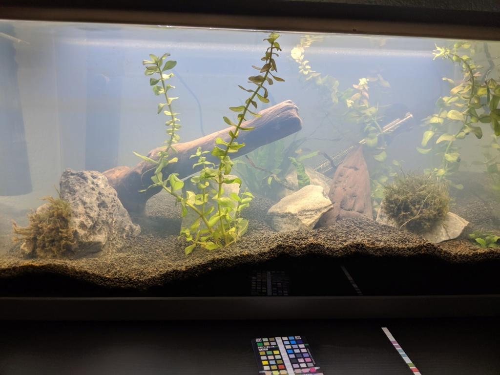 Lancement bac a crevettes 60l Img_2011