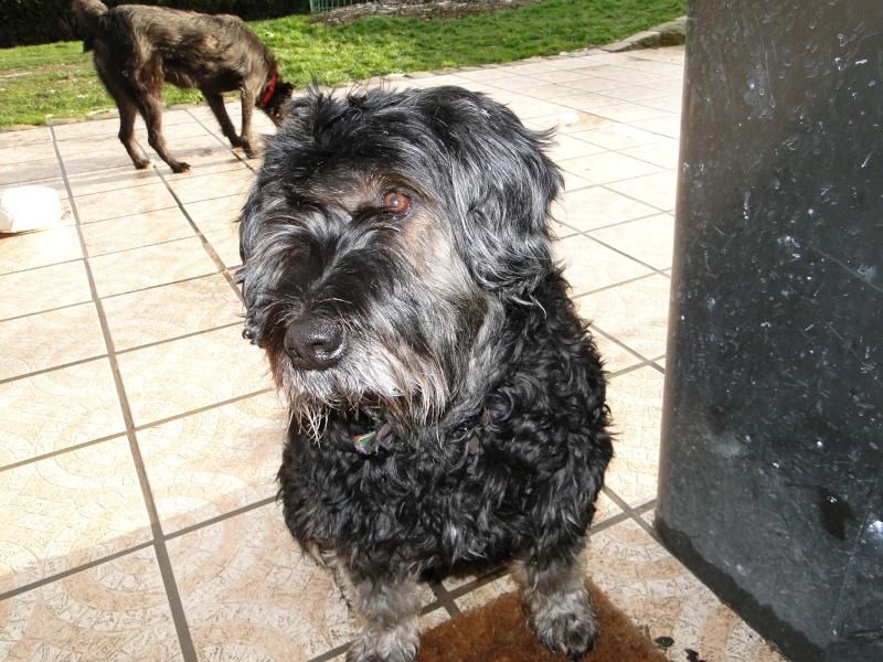 CANELLE petite X berger. Adoptée en septembre 2008 Noel_215