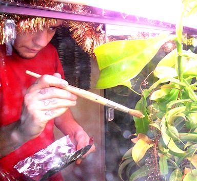 Mon Nepenthes Adnata Go10
