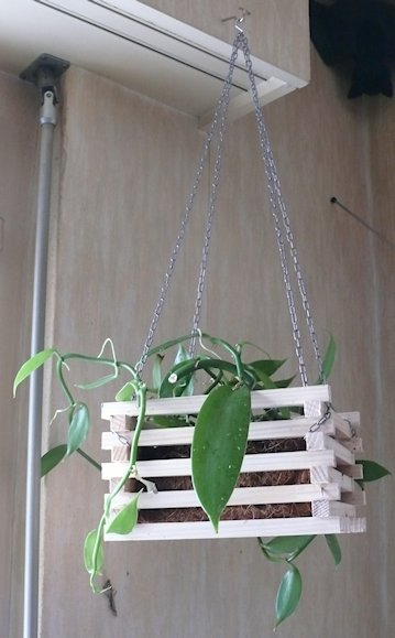 Vanilla Planifolia P1150110