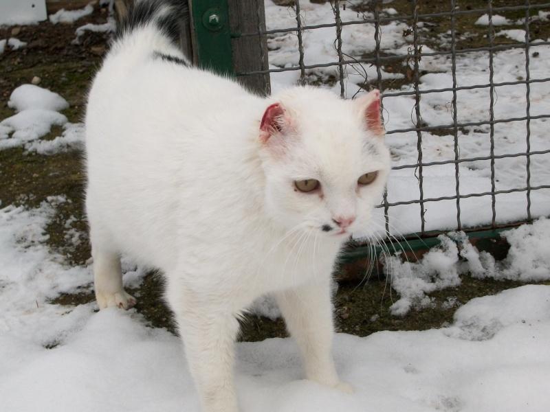 Noël, chat en attente d'un sauvetage... Cattyc22