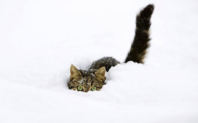 c'est l hiver il neige 147sno10