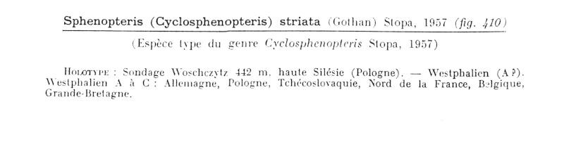 Eusphenopteris rotundiloba, Eusphenopteris talensii Bourea10