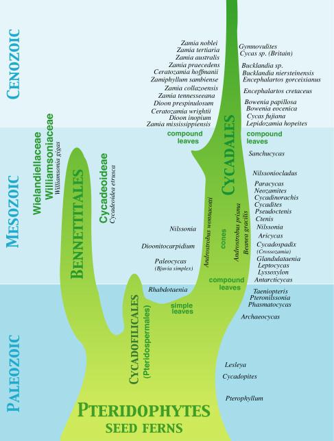 Bibliographie et sites web sur la  paléobotanique Cytree10