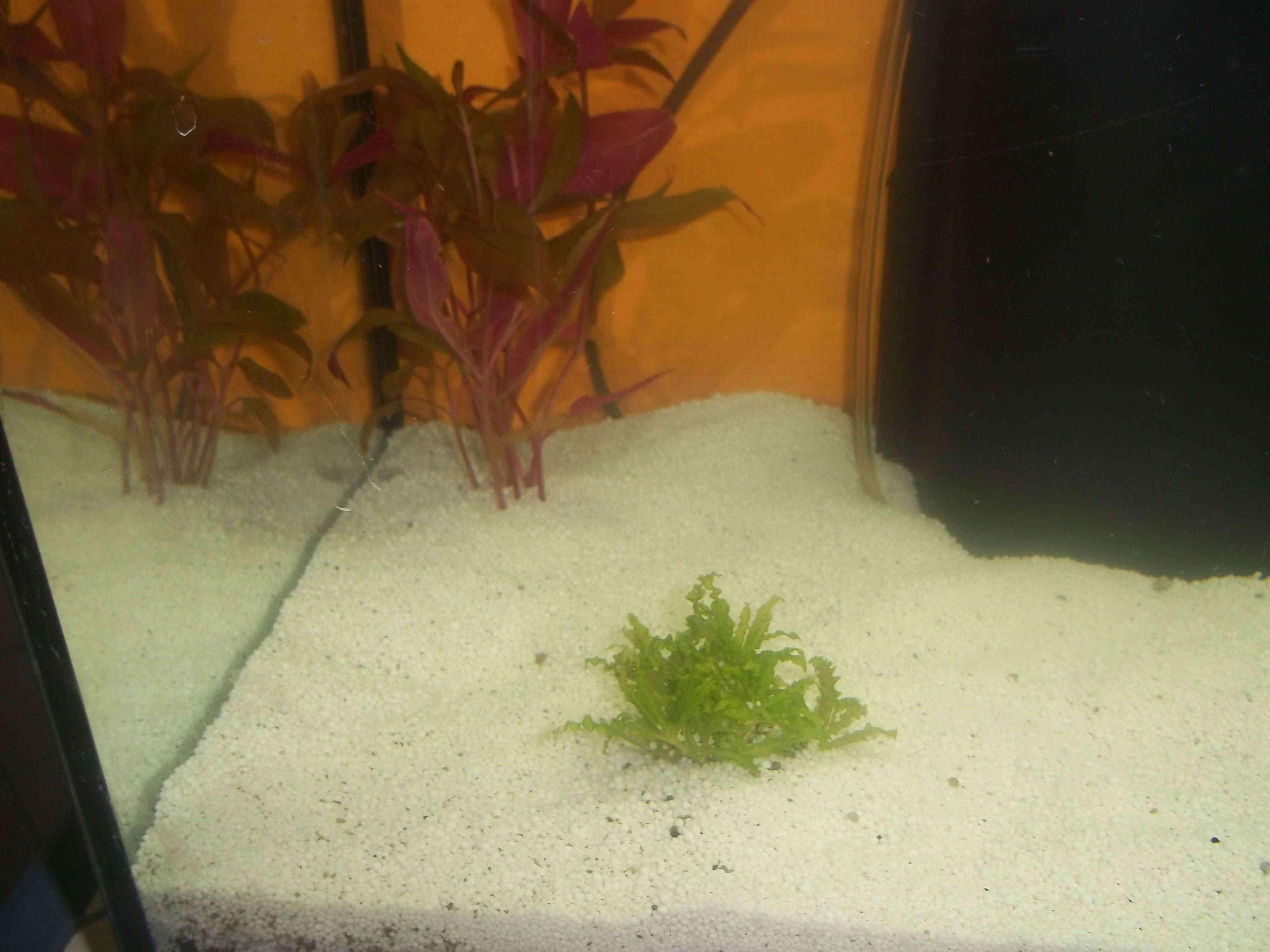 Mon aquarium 100_0611