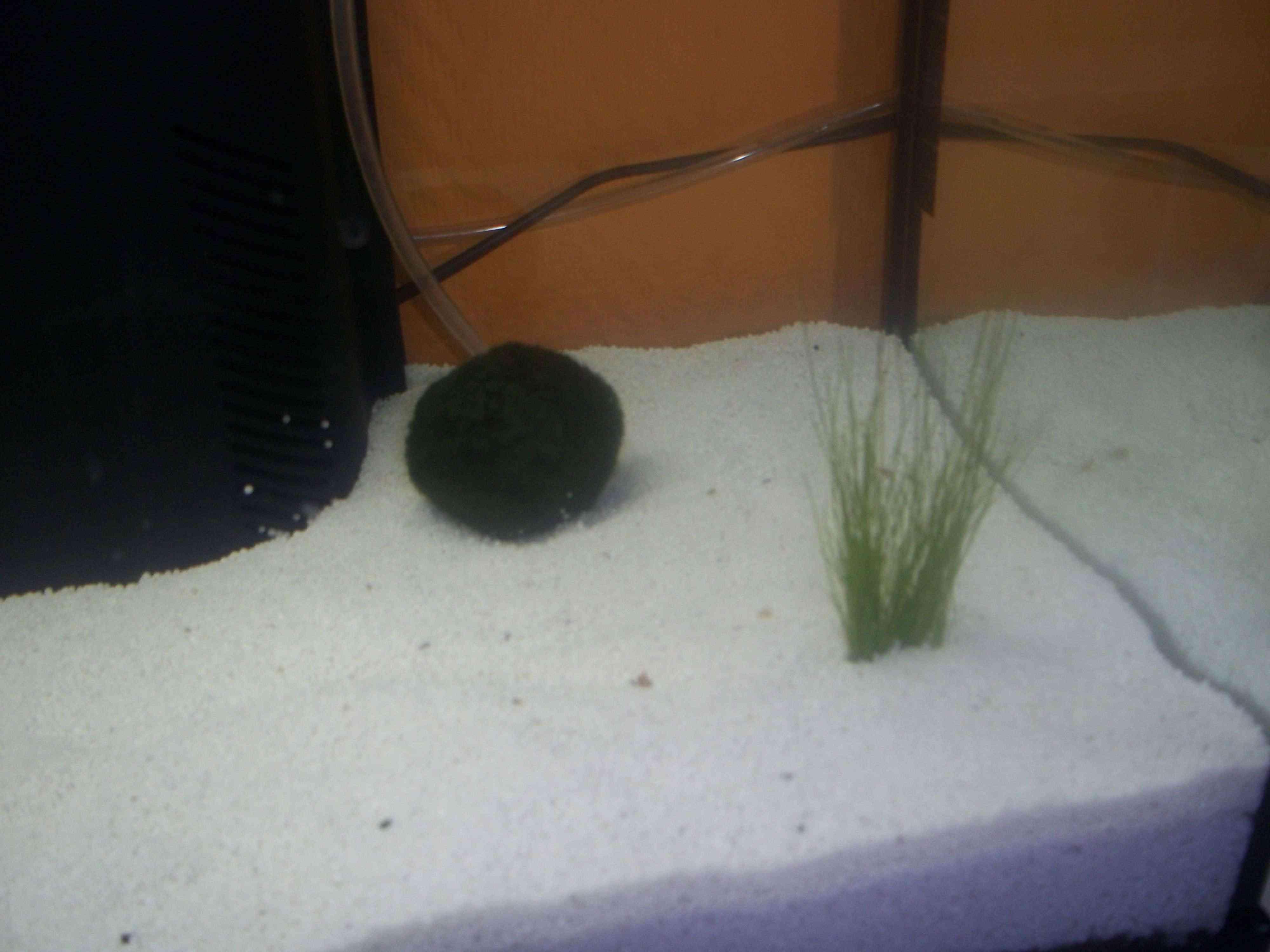 Mon aquarium 100_0612