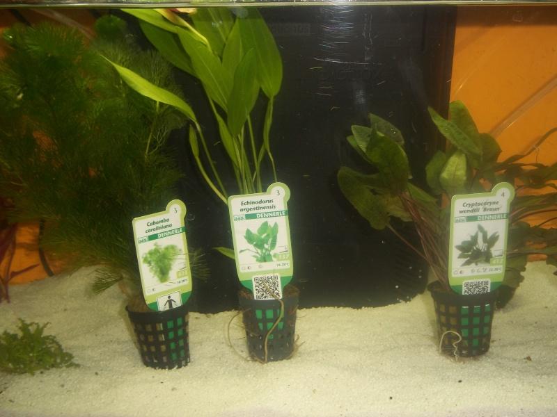 Mon aquarium 100_0619