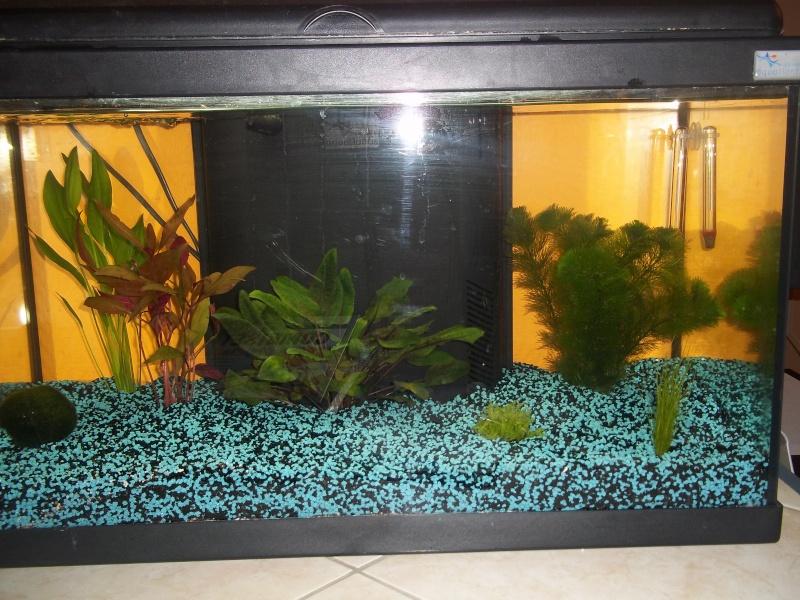 Mon aquarium 100_0623