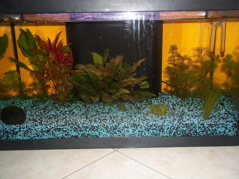 Nouveau Aquarium 130L et 60L spé crevettes 100_0629
