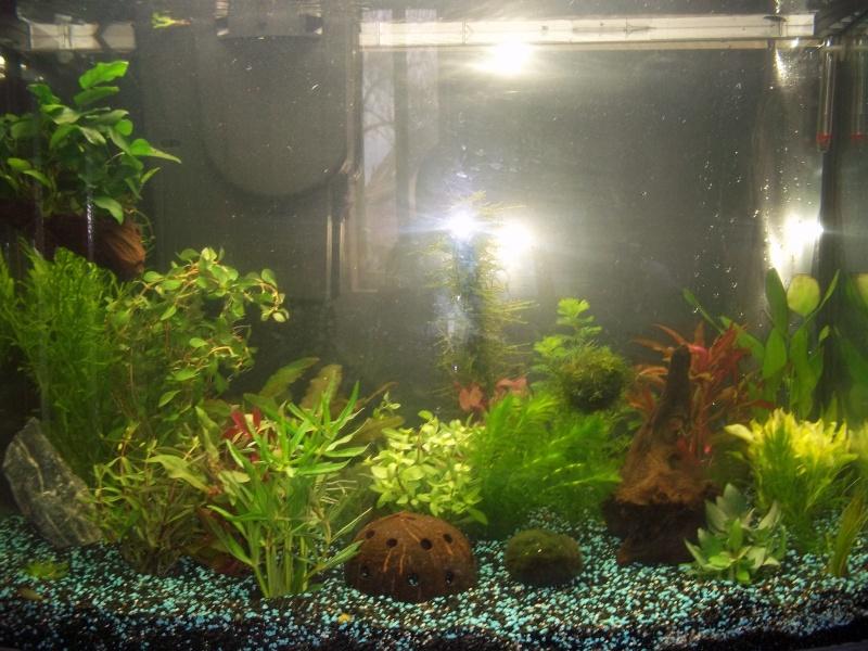 Nouveau Aquarium 130L et 60L spé crevettes 100_0633