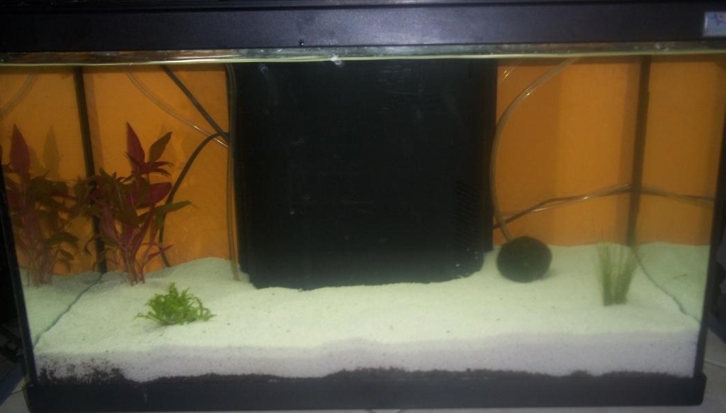 Mon aquarium Captur10