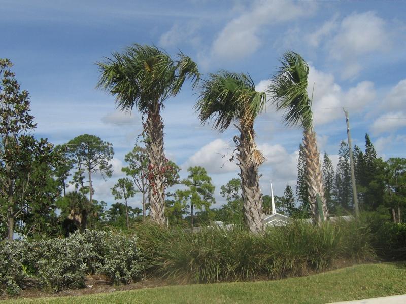 Mon voyage en Floride 01010